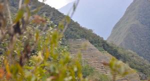 advantages of jungle trekking